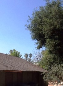 Trees can shade your roof and degrade your solar panel output.